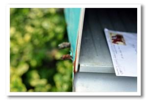 refund in mailbox