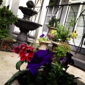 Jewel colored flowers & fountain