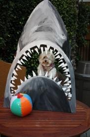 Jaws movie night photo fun