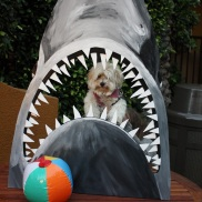 Jaws movie night photo fun