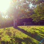 Lush green grass, trees, foliage wall, and bird bath