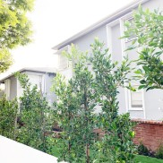 Building_Exterior_front yard_trees